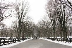 En plein Central Park