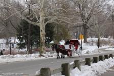 Petite balade dans Central Park