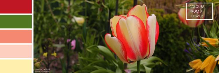 Inspiration from a flowerPlan de travail 1